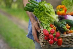 Humans Twisting of Food Causes Major Health Issues